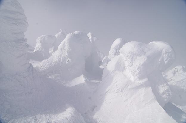 Photos: 樹氷19