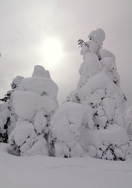 Photos: 樹氷23