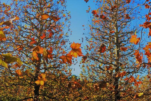 写真: 青空と紅葉