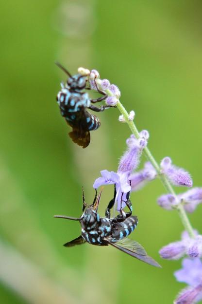 幸せを呼ぶ青い蜂・7