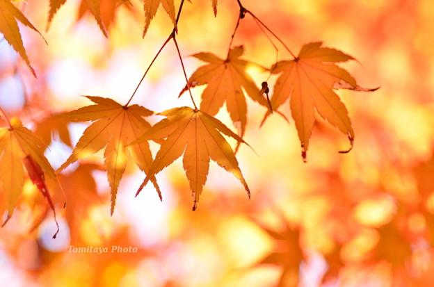 ひかりの秋