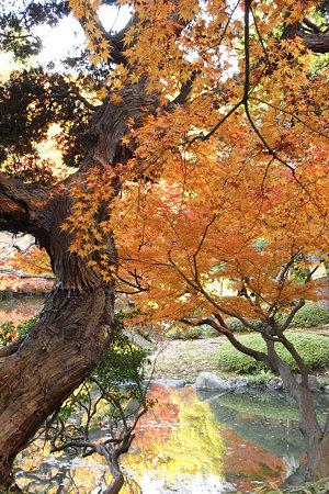 池・幹・紅葉