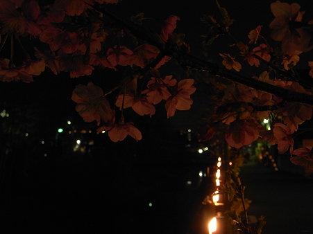 松戸夜桜竹灯火