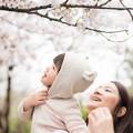 写真: 初見櫻花