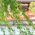 Photos: 春風に