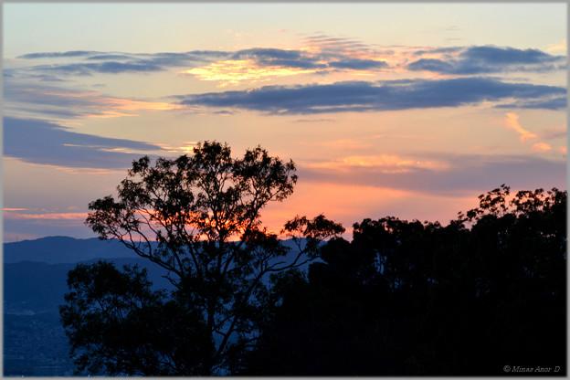 写真: 夕空に