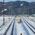 Photos: 北陸本線の車窓0014