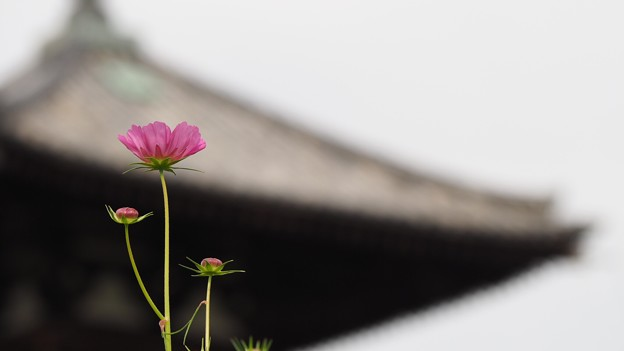 Photos: 秋の世界遺産