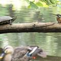 池の3カ、集合写真
