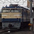 EF65 501 (3)