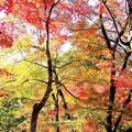 森が輝く時