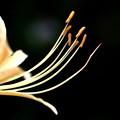 写真: 白い花!
