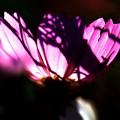 写真: 光と影!