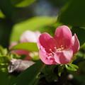 写真: 花 ひとつ