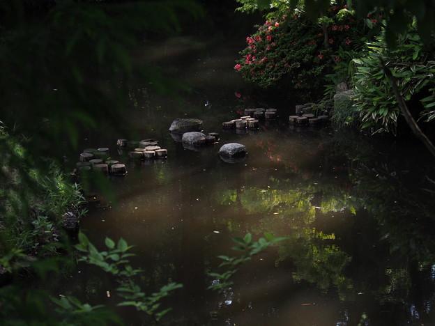 Photos: 水面の緑