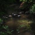 写真: 水面の緑