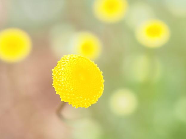写真: ママに花束を♪
