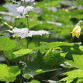 写真: 天涯の花