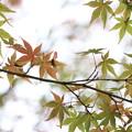 写真: 秋半ば