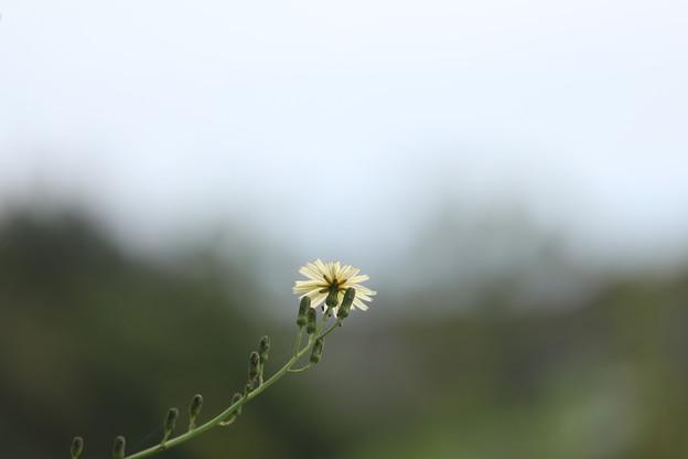 写真: 秋は続く