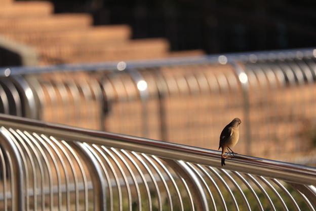 写真: 鉄柵の彼女