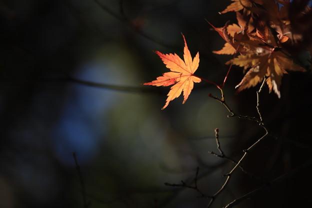 写真: ひと葉