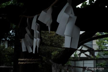 紙垂_f16-4226