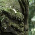 写真: 十二所神社_05狛犬-5820