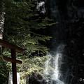 母の白滝-6015