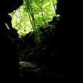 胎内神社12俗世の緑-6013