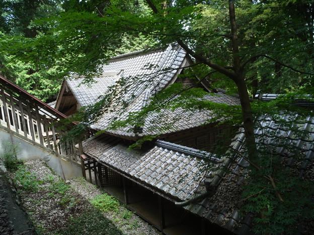 武田八幡宮04_本殿から拝殿を望む_GXR-0048272
