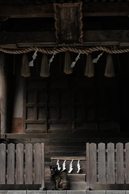 飯能恵比寿神社-6089