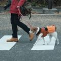 Pumpkin Dog-6381