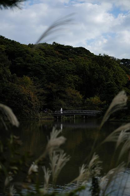 三渓園_橋-6387