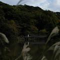写真: 三渓園_橋-6387