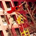 Photos: かなりの力とバランス。。横浜中華街春節 2月21日