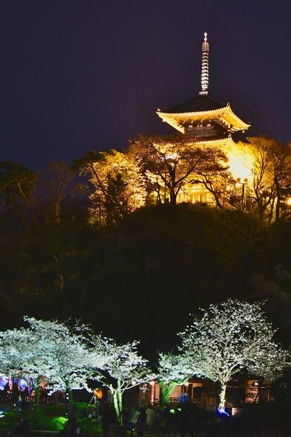 夜桜と浮き上がる金色のライトアップされた三重塔20170402