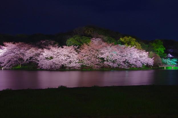 静寂な夜の夜桜。。横浜三渓園 20170402