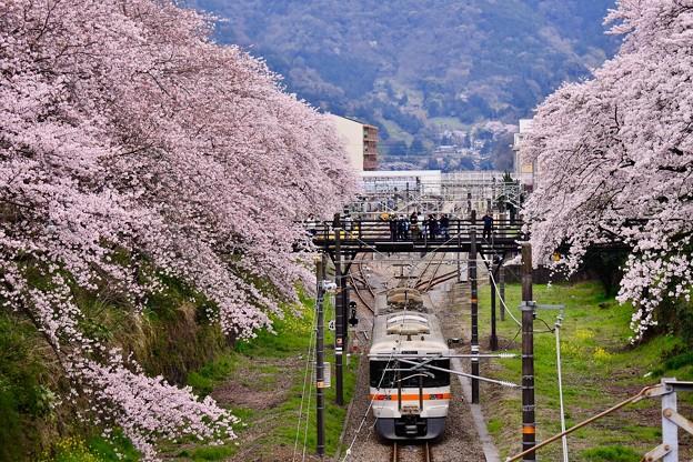 御殿場線を彩る山北の桜並木。。20170410