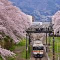 写真: 御殿場線を彩る山北の桜並木。。20170410