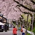 写真: 神奈川県山北町の桜並木。。散歩 20170410