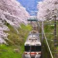 御殿場線から見える山北の桜並木 20170410