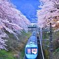 ライトアップされ特急あさぎり新宿へ。。山北の桜トンネル。。20170410