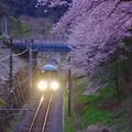 夕暮れの山北の桜。。ライト照らして走行する特急あさぎり号 20170410