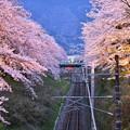 夜桜へ。。山北の桜トンネル。。20170410