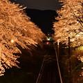 御殿場線山北。。綺麗にライトアップされた桜トンネル 20170410