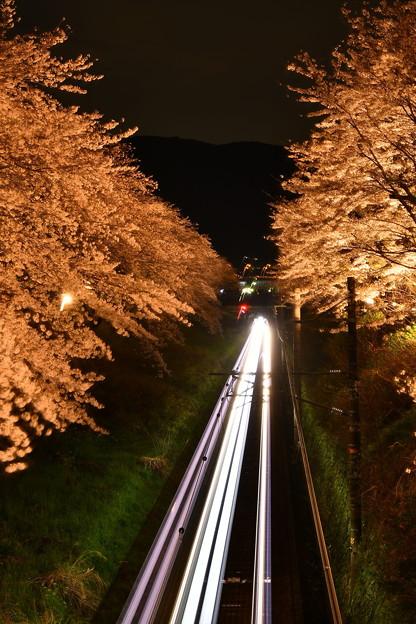 夜桜の山北。。御殿場線向かってレーザービーム20170410