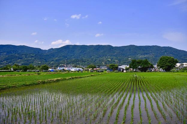 梅雨の晴れ間の開成町 田んぼ風景 20170610
