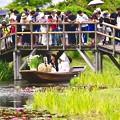 Photos: 水郷佐原あやめパーク名物。。結婚式嫁舟 20170611