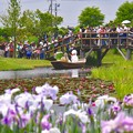 Photos: 雨も降らず。。いい結婚式花菖蒲と嫁舟 20170611